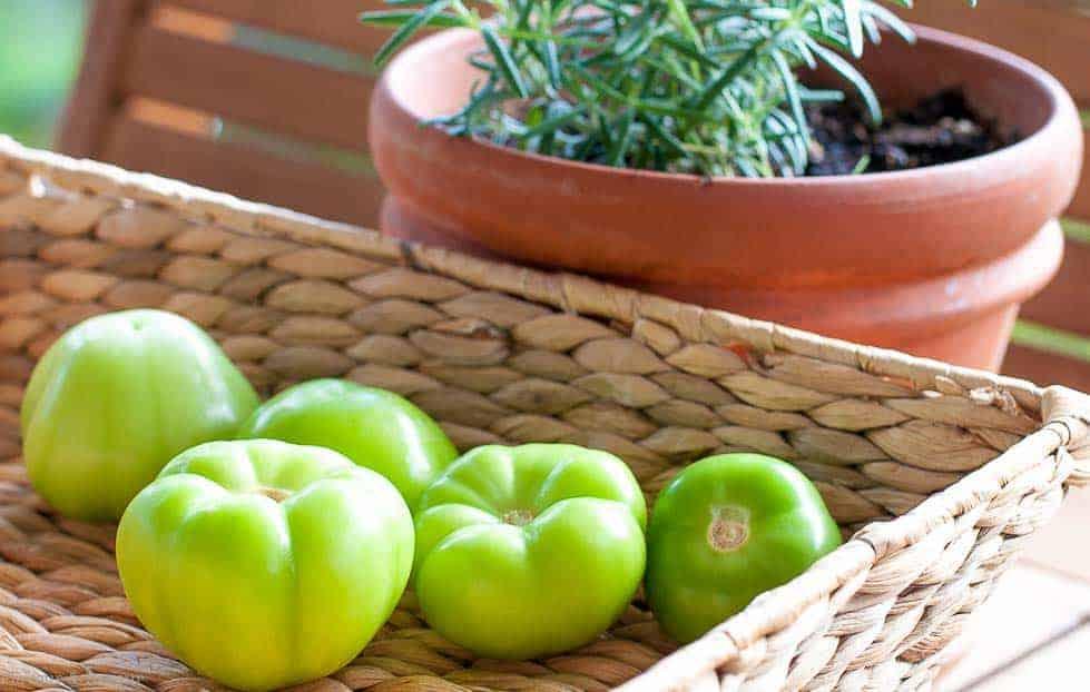 Fresh Tomatillos for Tomatillo Guacamole and Shrimp Tacos